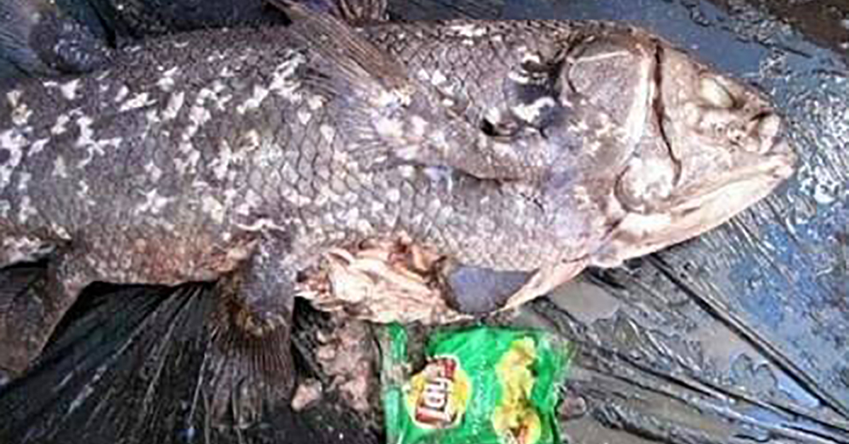 Tragic Photo Shared By Environmental Group Raises Some Serious Questions
