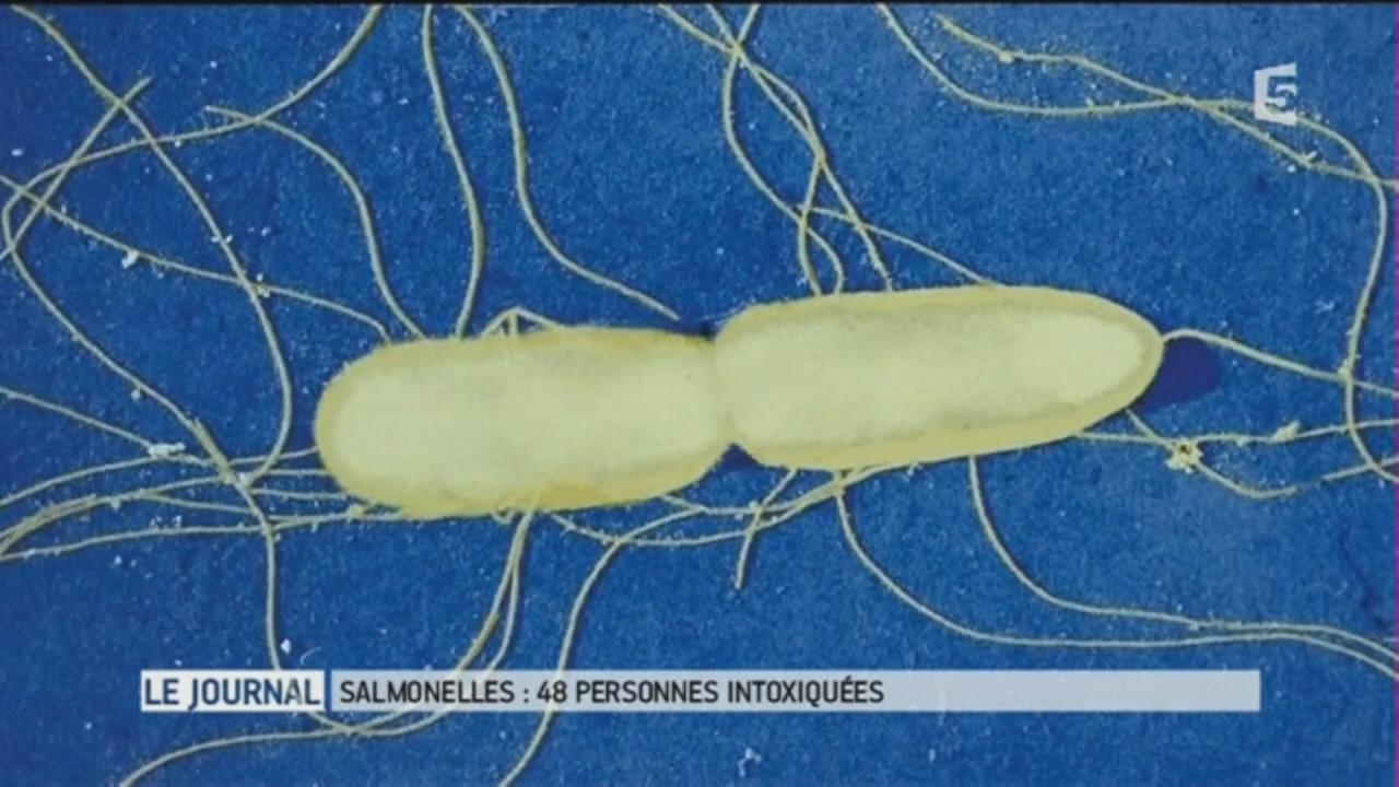 Salmonella: salmonellosis, symptoms, cause and transmission
