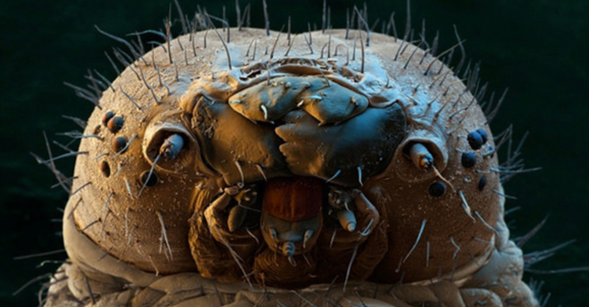 This Terrifying Micro Spider Is Probably Crawling Across