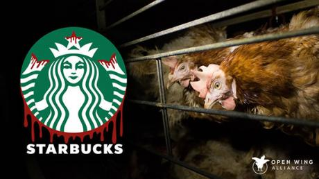 This Organisation Has Just Launched A Major Petition Against Starbucks