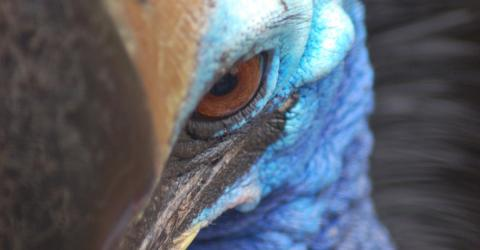 This Is The Most Dangerous Bird In The World