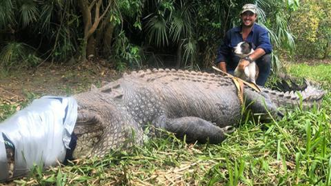 This 600 Kilo Crocodile Has Finally Been Imprisoned After Dog-Eating Rampage