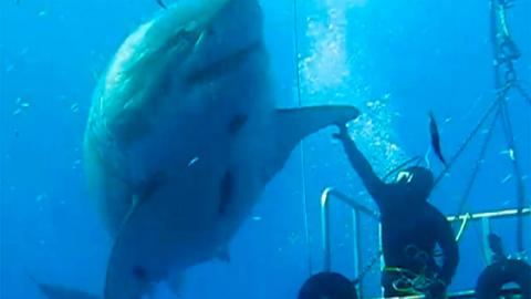 This Is One Of The Largest Sharks Ever Caught On Camera