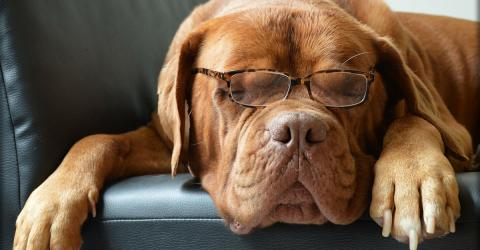 Here's Why Your Dog Is Probably Not As Smart As You Think