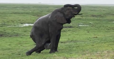 This Incredible Video Of An Elephant Giving Birth Hides A Devastating Secret