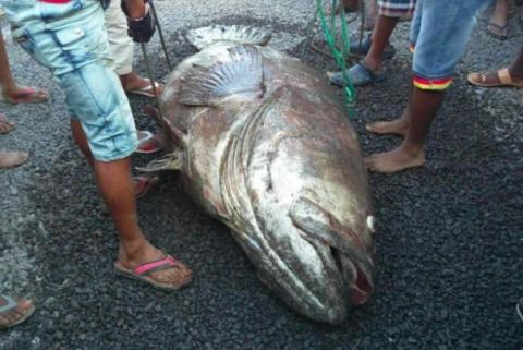 They Couldn't Believe Their Eyes When This Giant Fish Washed Up Onshore