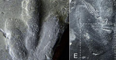 Uncovered Dinosaur Tracks Reveal What Their Skin Really Looked Like (VIDEO)