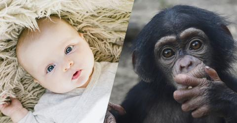 Babies Use 95% Of The Same Gestures As Chimpanzees To Communicate