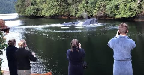 These Tourists Saw Something Incredible Whilst Whale Watching