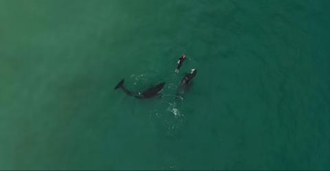This Incredible Footage Shows A Swimmer Getting Unbelievably Close To A Family Of Orcas