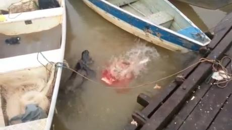Video Captured By Tourists Prove How Terrifying Starving Piranhas Are