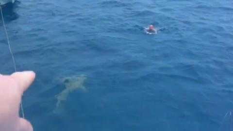 This Tourist Came Face To Face With A Shark... What Happened Next Was Terrifying