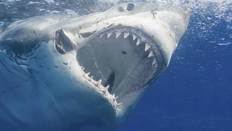 This Boy Was Attacked By A Great White Shark, Narrowly Escaping With His Life