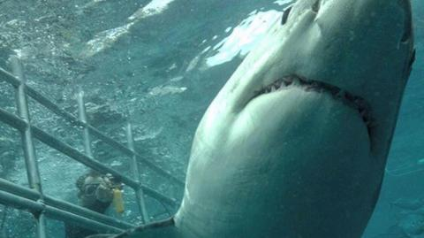 This Footage Of A 'Satanic' Shark Is Panicking The Internet