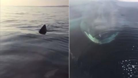 The Incredible Moment Cornwall Fisherman Films 26ft Shark Just Beneath His Boat