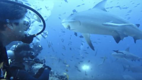 This Group Of Divers Had A Narrow Escape When They Were Surrounded By Sharks