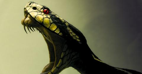 The Secret Behind The Evolution Of Snake Venom Has Finally Been Revealed