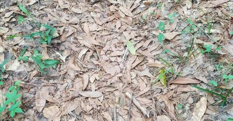Only 2% Of People Can Spot The Snake Hidden In This Picture