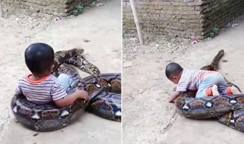 People Are Outraged At This Video Showing A Toddler 'Playing' With An Enormous Python