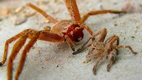 These Are The 5 Deadliest Spiders In The World