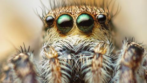 Scientists Say Spiders Could Eradicate Humans From The Earth In A Year