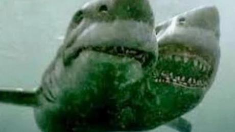 Scientists Discover Terrifying Two-Headed Shark In Mediterranean Sea