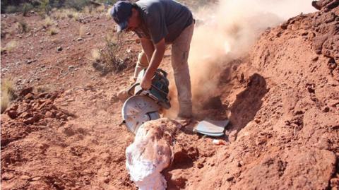 Ingentia Prima: The species of giant dinosaur that's shocking experts