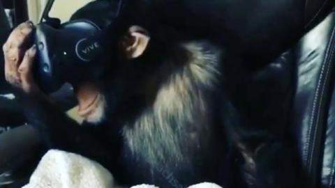 This Is What Happens When You Give A Virtual Reality Headset To A Monkey