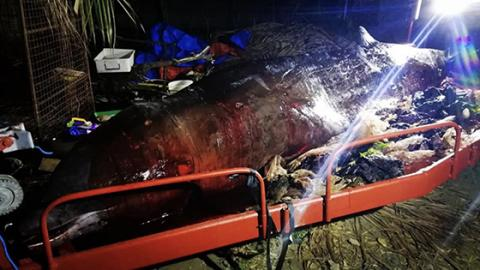 This Whale Was Discovered With Something Awful In Its Stomach