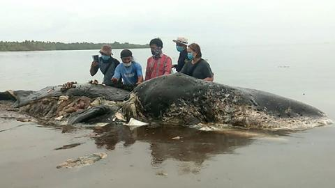 This Whale Washed Up In Indonesia... What They Found In Its Stomach Left Them Speechless