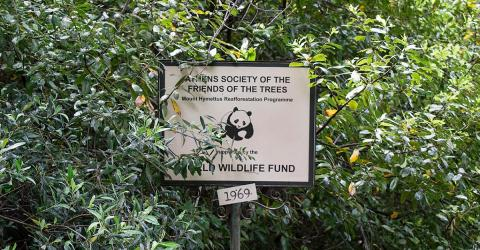 WWF Accused Of Funding Anti-Poachers Suspected Of Torture And Murder