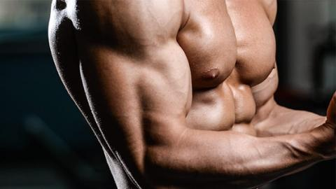 Four Easy Exercises To Build Your Biceps