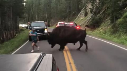This Man Instantly Regretted Provoking A Bison