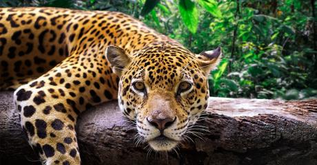A Quarter Of Endangered Species In The World Are In Danger Due To Human Activity