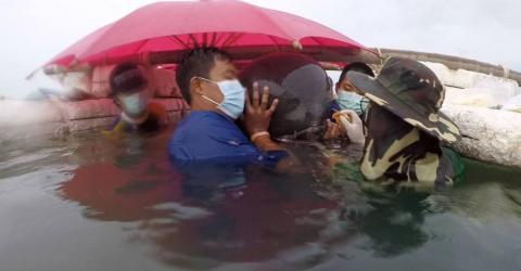 Thai Officials Made A Horrendous Discovery In This Whale's Stomach