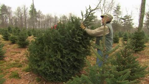 Is A Real Or Fake Christmas Tree Better For The Planet? The Answer May Surprise You...