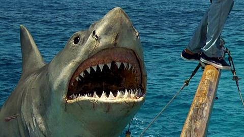 A 45-Year-Old Murder May Finally Have Been Solved - Thanks To Jaws