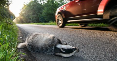 The Roadkill Cookbook Sparks Widespread Controversy