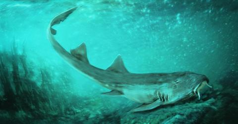 This Ancient Shark Has Been Given A Seriously Unexpected Name...