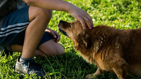 A Fascinating New Discovery Reveals How Long We've Really Loved Dogs