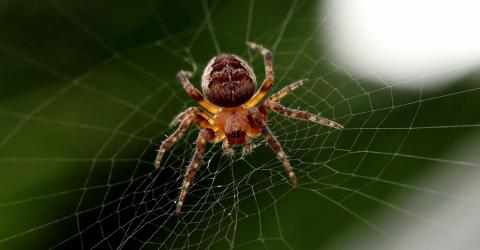 Why Should Really Never Kill A Spider In Your House