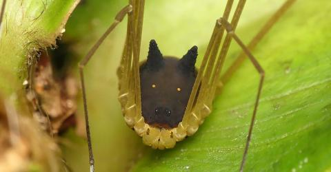They Filmed This Spider In Ecuador... They Couldn't Believe It When They Saw Its Head
