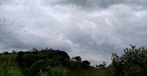 Incredible Footage Shows Storm Of 'Raining Spiders' In Brazil