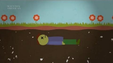 Have You Ever Wondered What Will Happen To Your Body After You Die? This Video Explains...