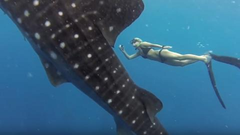 This Female Diver Gets Up Close And Personal With A Whale Shark In Stunning Footage