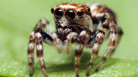 Spiders on Drugs May Be the Best Thing We've Seen All Week
