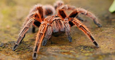 Hey, arachnophobes! This study holds the cure to your fear