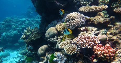 Australia Wants To Open A Coal Mine Near The Great Barrier Reef