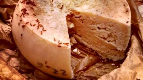 Footage Of 'The World's Most Dangerous Cheese' Would Scare Off Even The Biggest Fan