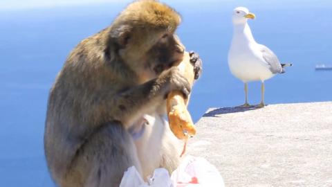 This Tourist Had His Sandwich Stolen By A Monkey In Hilarious Footage